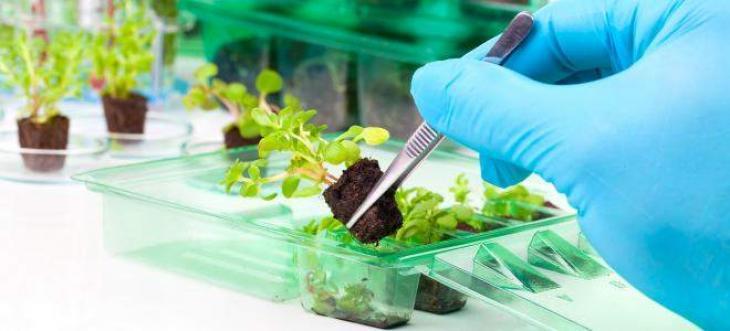New breeding technologies to grow salt-resistant crops