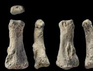 Finger bone points to early humans in Arabia