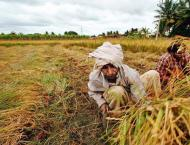 Agricultural initiatives to help increase crop production
