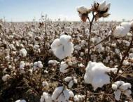 Agriculture Department to hold cotton seminars in districts Multa ..