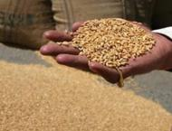 149,000 metric tons wheat to be procured from Faisalabad