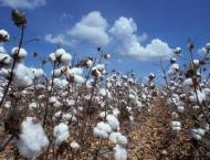 Cotton crop to be cultivated over 2,955 thousand hectares
