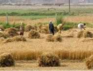 Govt releases Rs 1,011.04 million for agriculture development