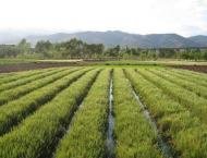 Magnate therapy can increase agricultural yield