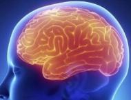 Stronger people have sharper brains: Study