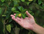 Mediterranean fears bitter future for citrus crops