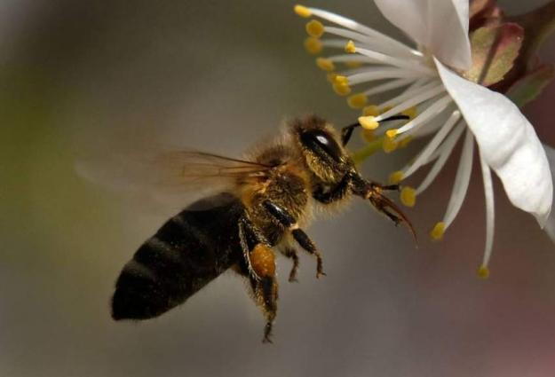European Union votes to ban the use of bee-killing neonicotinoids
