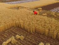 Economic Watch: China increases agricultural imports to benefit i ..