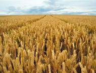 Wheat production decreasing due to negative changes in climate co ..