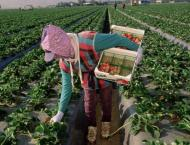 Moroccan fruit pickers file sexual harassment complaints in Spain ..