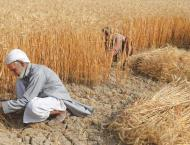Wheat procurement drive concludes in Mianwali