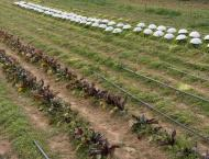 Drip irrigation system beneficial for farmers