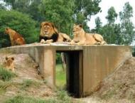 DG Khan zoo earned Rs 444,100 during Eidul Fitr days