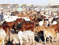Livestock departments to work with FAO to help control Foot, Mout ..