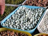 Agriculture deptt provides pulse seeds on subsidized rates