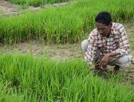 Minister directs to adopt effective mechanism for agriculture sec ..