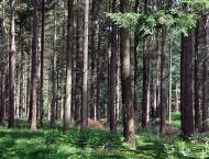 Commercial forestry helping in mitigating impacts of climate chan ..