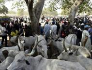 Suspected cattle thieves 'kill 26' in NW Nigeria