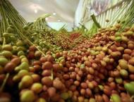 14th Liwa Date Festival to get underway on Wednesday