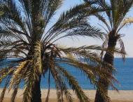 Khalifa International Award for Date Palm announces registration  ..