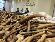 China seizes 156 mammoth tusks in huge ivory haul