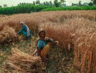 Pakistan's agriculture sector records notable improvement: Asian  ..