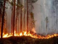 Fires spark biodiversity criticism of Sweden's forest industry