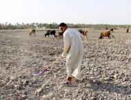Cultivated areas halve in Iraq as drought tightens grip