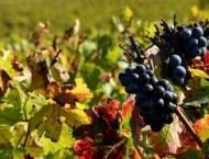 Heat brings relief for French vineyards