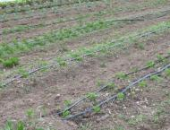 Rs 67b being spent on Drip Irrigation System