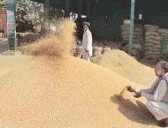 Robust plan afoot to ensure enough stock of wheat in GB: Official ..