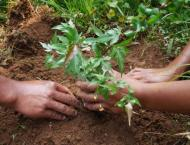 32,000 saplings to be planted in Sibi on Independence Day: DC Sib ..