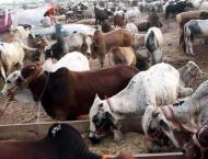 Vendors complain of missing facilities at I-12 sacrificial animal ..