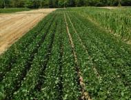 Soybean cultivation be completed by mid-August