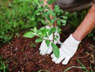More than 27 mln trees planted under Green Pakistan Programme