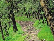Revival of forestry resources aims to increase forest cover of co ..