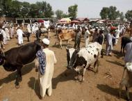 Ban on transportation cattle in Peshawar