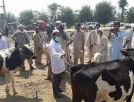 Anti-congo campaign launched in Bajaur