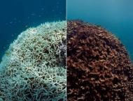 Virtual reality initiative helps scientists map Great Barrier Ree ..