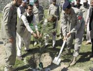 Army assisted plantation drive starts in Dir