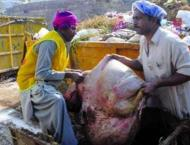 3612 sanitary workers to remove offal from city, Rawalpindi Canto ..
