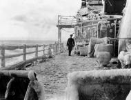 FEATURE - UK Veteran of Arctic Convoys Says 'Good to Have Russian ..