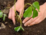 Telecos takes part in tree plantation campaign to promote green e ..