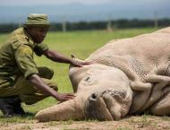 How a plan to save Kenya's rhino left 11 dead in historic blunder ..