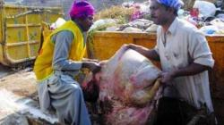 3612 sanitary workers to remove offal from city, Rawalpindi Cantonment Board (RCB)areas