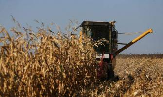 Russias Grain Harvest Fell by Over 20% Year-on-Year Basis - Agric ..
