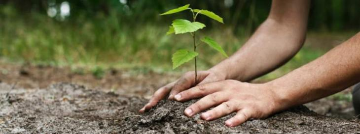 Tree Plantation Campaign Kicks Off In Nawabshah - UrduPoint