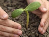 Chairman Council of Islamic Ideology plants 50 saplings