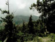 64 mln to be spent on revival of Juniper forests under Green Paki ..