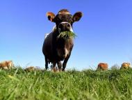 New Zealand economy picks up amid agricultural growth